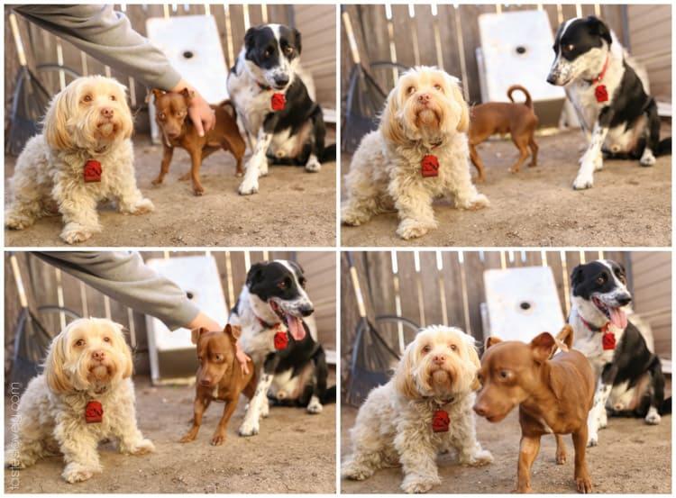 Lou, Max & Jake | tasteslovely.com