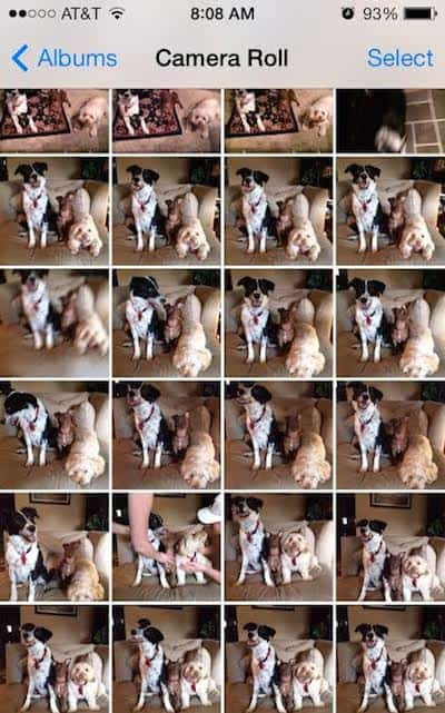 Grid of Dog Pictures