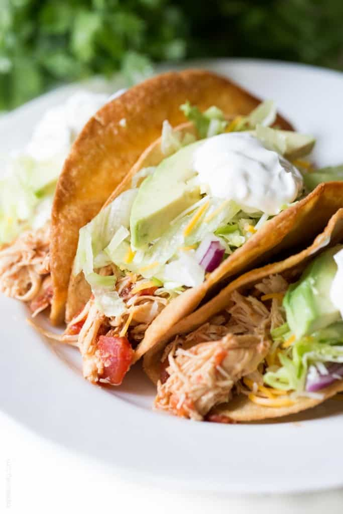 shredded chicken tacos recipe epicurious